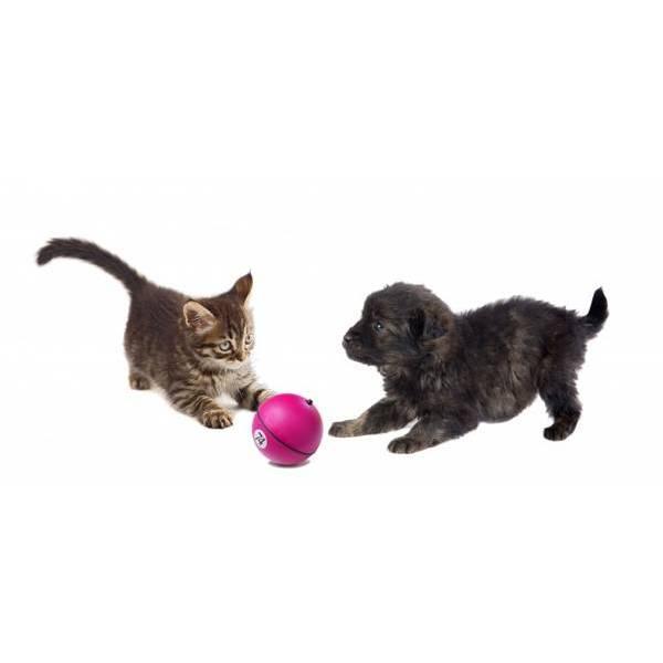 Rotaļlieta kaķiem/suņiem D&D ADVENTURE diam. 8cm lime