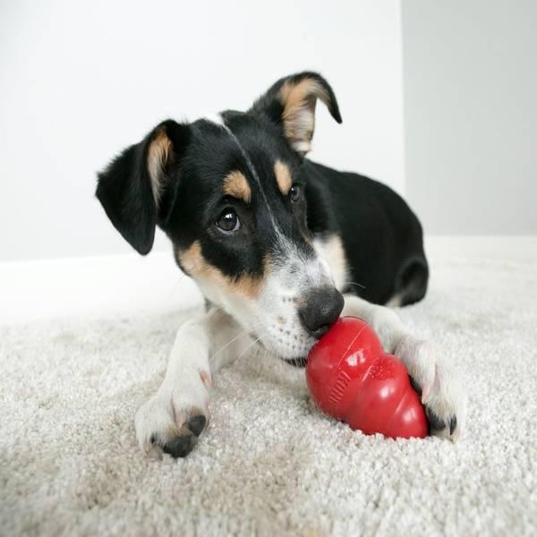 KONG CLASSIC - Large - rotaļieta suņiem
